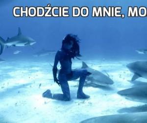Chodźcie do mnie, moje rekiny!