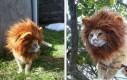 Sztuczna grzywa dla kota