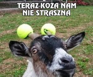 Teraz koza nam nie straszna