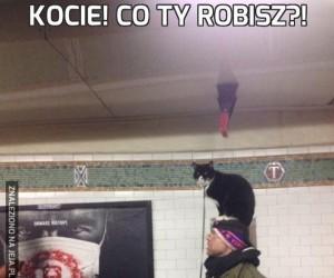 Kocie! Co Ty robisz?!