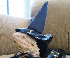 You're a lizard, Harry!
