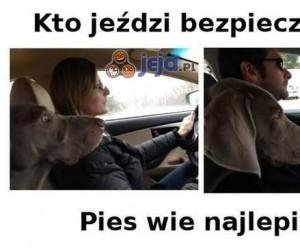 Pies prawdę Ci powie