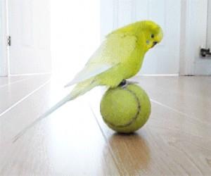Ptak na piłce