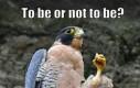 Być, albo nie być