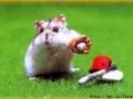 Chomik gra w baseball