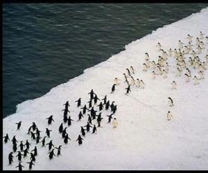 Za Antarktydę!