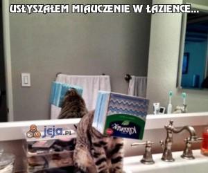 Usłyszałem miauczenie w łazience...