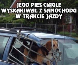Gdy pies wyskakuje z samochodu