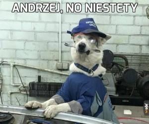 Andrzej, no niestety