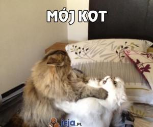Mój kot to socjopata