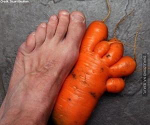 Do czego prowadzi wegetarianizm