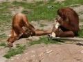 Zdolne małpy