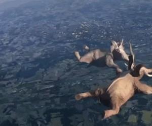 Kto powiedział, że słonie nie potrafią skakać?