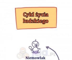Cykl ludzkiego życia