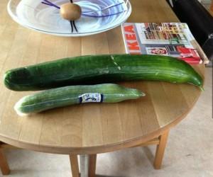 Wyhodowany w ogródku vs sklepowy ogórek