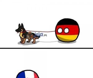 Psiaki z różnych stron świata