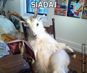 Siadaj