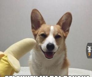 Człowiek dał mi banana