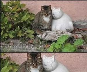Prawdziwy koci przyjaciel