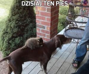 Dzisiaj ten pies