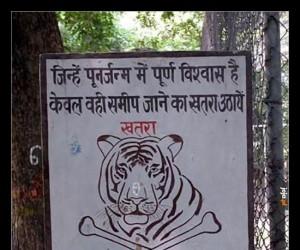 """""""Tylko ci, którzy mocno wierzą w reinkarnację, mogą podjąć ryzyko i zbliżyć się do tygrysa"""""""