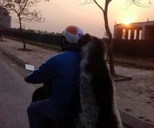 Z huskym na przejażdżce