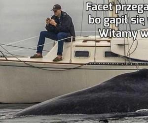 Facet przegapił wieloryba, bo gapił się w smartfona