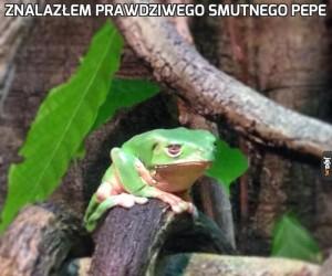 Znalazłem prawdziwego smutnego Pepe
