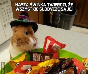 Nasza świnka twierdzi, że wszystkie słodycze są jej