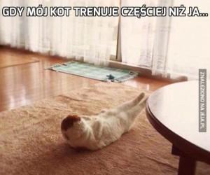 Gdy mój kot trenuje częściej niż ja...