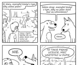 Beztroskie życie psa