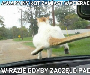Awaryjny kot zamiast wycieraczek