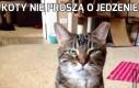 Koty nie proszą o jedzenie