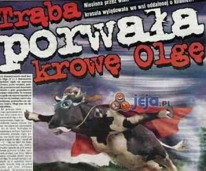 Trąba porwała krowę Olgę!