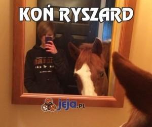 Koń Ryszard