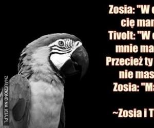 Zosia i Tivolt