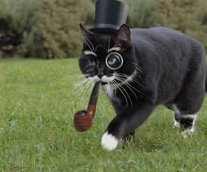Ten koteł ma klasę