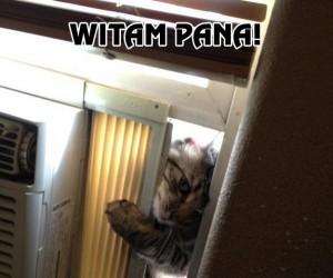 Jehowy kot