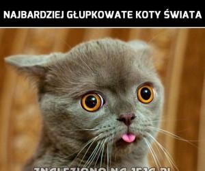 Najbardziej głupkowate koty