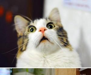 Koty to najbardziej dramatyczne zwierzaki na świecie