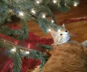 Na nagraniu widać, jak choinka powoduje błąd w oprogramowaniu kota