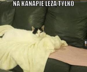Rozpuszczony kot
