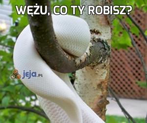 Wężu, co ty robisz?