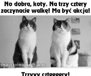 Koty - po prostu mają to gdzieś