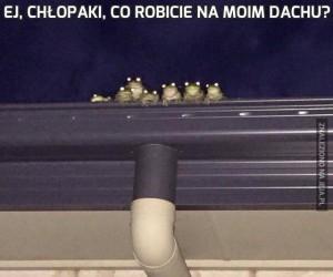 Ej, chłopaki, co robicie na moim dachu?