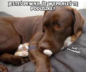 Nowa psia poduszka