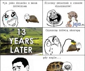 To niby żółwie są wolne...