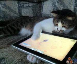 Kot podążający za trendami technologii