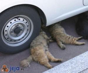 Koci mechanicy