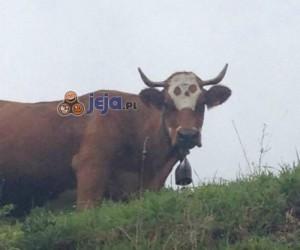 Witamy na brutalnej farmie!